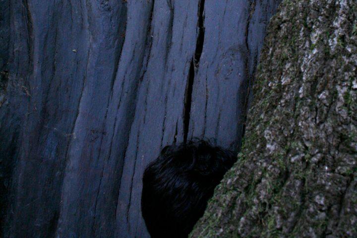 Lara-Trevisan-Uomo-quercia-2011-stampa-fotografica-100-x-70-cm-1800x1200